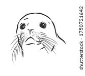 Funny Sketch Of A Sea Lion...