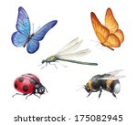 Watercolor Insects Illustrations