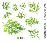 Dill Isolate. Fresh Dill...