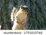 Squirrel Enjoys A Sunny Day At...