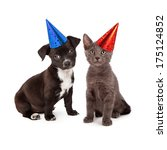 Stock photo black and white puppy and a gray kitten sitting together wearing festive party hats 175124852