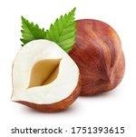 Hazelnut Nut. Hazelnut Isolated ...