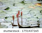 Dragonfly Resting On A Lily...