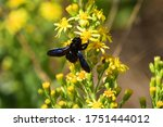 Isolated Black Insect Of The...