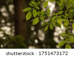 green leaves on a tree branch | Shutterstock . vector #1751473172