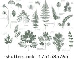 set of dried herbs and natural... | Shutterstock .eps vector #1751585765