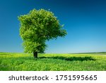 Big Green Tree And Blue Sky ...