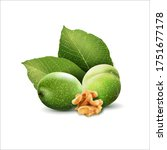 green walnut  peeled walnut and ...   Shutterstock .eps vector #1751677178