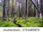 Wilderness mossy forest trees view. Mossy forest wilderness scene
