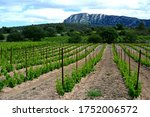 Vineyard With Pic Saint Loup...