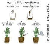 transplanting potted flower... | Shutterstock .eps vector #1752314162