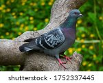 Gray Purple Dove On A Brown Tree
