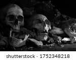 Pile Of Skulls And Bone And Jaw ...