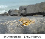 A Brown Spotted Yellow Crab On...