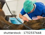 Equine Surgery By Horse...
