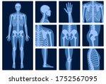 human man skeleton anatomy and... | Shutterstock .eps vector #1752567095