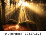Beautiful Mystical Forest And...