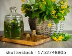 Medicinal Herb Celandine In A...