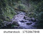 Great Photo Of A River With...