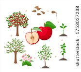 Apple Tree Life Cycle From...
