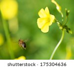 Bee Flies Near A Yellow Flower