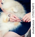 Trimming The Dog\'s Claws. Dog\'...