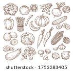 sketch vegetables. vector set...   Shutterstock .eps vector #1753283405