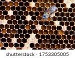 honeycomb pattern. a honeycomb... | Shutterstock . vector #1753305005