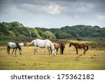 Pony's In New Forest National...