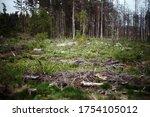 Northern Swamps Of Karelia....