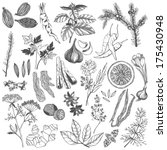 vector set of hand drawn spices ...   Shutterstock .eps vector #175430948