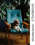 Beautiful Dog Beagle Sitting On ...