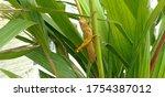 Grasshopper On Green Grass...