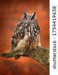 Eagle Owl  Bubo Bubo  With Ope...