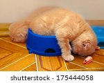 Stock photo kittens sleeping after meals in a bowl 175444058