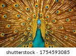 The Beauty Of The Peacock\'s...