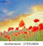 poppies on green field | Shutterstock . vector #175513856