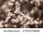 Close Up Of A Branch Of A...