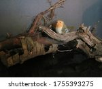 A Photo Of Artificial Bird On...