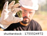 Miner Holding Gold Nugget ...