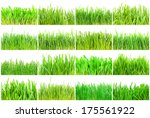 fresh green grass isolated on... | Shutterstock . vector #175561922
