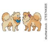 cute cartoon pomeranian dog boy ... | Shutterstock .eps vector #1755744305