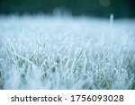 Winter Morning Frost On Grass...