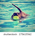A Dachshund With A Ball In His...