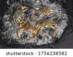Seafood Crab On Ice   Fresh Ra...