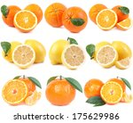 fruit citrus | Shutterstock . vector #175629986