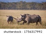 White Rhino With A Massive Horn ...