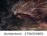 Close Up funny sleeping cat's Portrait of sleeping  House cat.  - stock photo