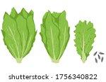 lettuce leaves and salad vector ...   Shutterstock .eps vector #1756340822