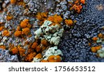 Lichens Of Different Colors...